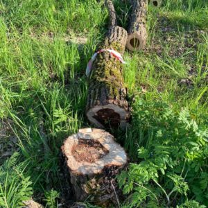 Первая фаза работ по сносу и санитарной рубке утративших жизнеспособность деревьев и кустарника завершена